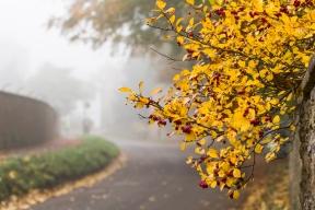 Misty autumn morning on Main Street