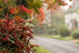 Autumn berries outside Rowleys