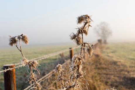 Even more frosty winter fields
