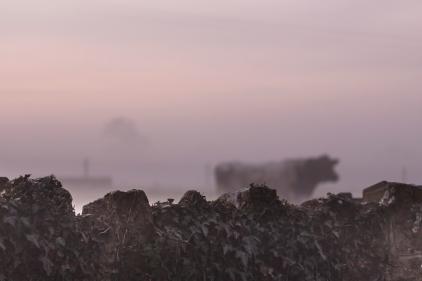 Fog falls in the fields behind St Leonard's
