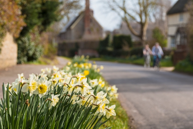 Daffodils on Main Street