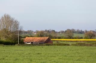Keevil fields of gold looking towards Seend