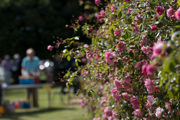 Summer roses at the fete at the Manor