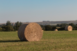 Harvest in the fields up towards Cold Harbour