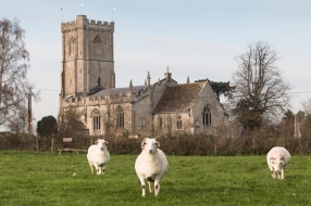 Sheep vogue it up in front of St Leonards church