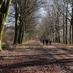 The Broad Drive in Grovely Woods, February 2018