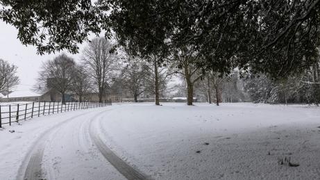 Snow day Feb 1 2019-6702