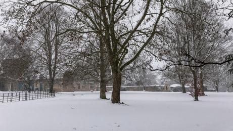 Snow day Feb 1 2019-6704