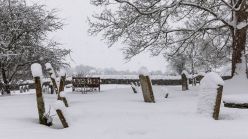 Snow day Feb 1 2019-6772