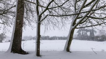 Snow day Feb 1 2019-6785