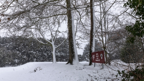 Snow day Feb 1 2019-6786