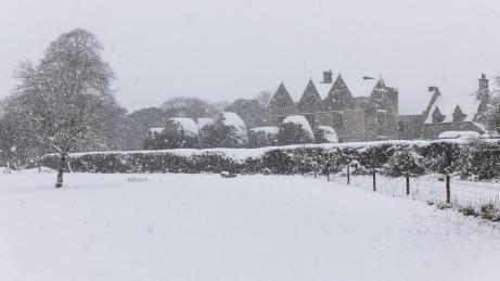 Snow day Feb 1 2019-6790