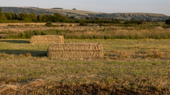 Haybaling in the fields behind Martins Road, July 2019