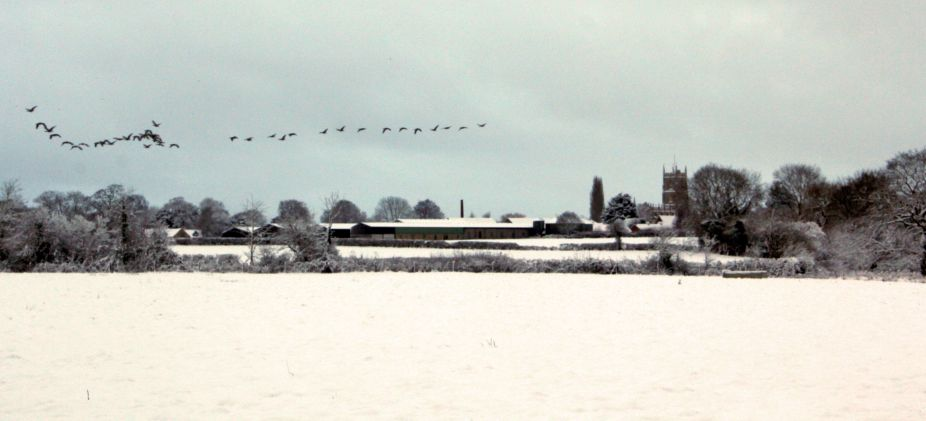 Looking over the fields towards Steeple Ashton